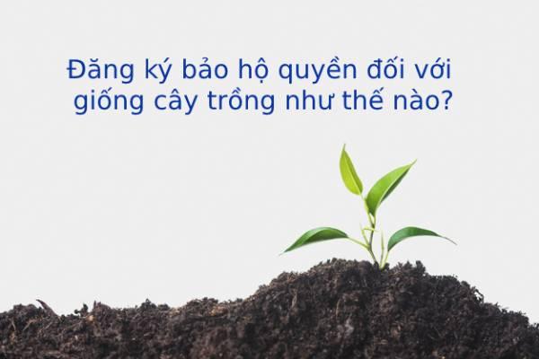 Dang Ky Bao Ho Quyen Doi Voi Giong Cay Trong Nhu The Nao